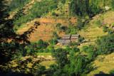 House built among terraced fields, Nepal