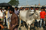 A big bull getting lead through the market