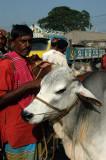 Fatulla Cattle Market, Bangladesh