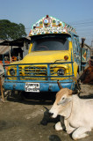 Cow waiting by a truck for it to all be over