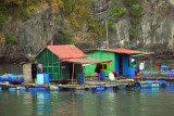 Cruising by the floating village leaving Ben Beo Harbor on Cat Ba Island