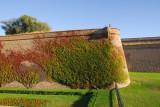Vine covered walls of Montjuïc Castle, Barcelona