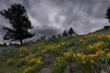 Yellowstone Landscapes I
