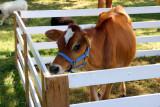 Grange Fair 2011