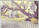 Handcolored Oneco Tree
