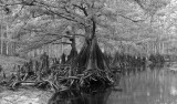 Fisheating Creek Drought 1