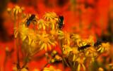 Wasps on Yellow Flowers Great Basin OP6.jpg