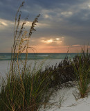 Sea Oats at Ft. Pickens