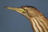 Storks, Herons, etc.