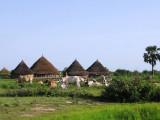 a Dinka homestead