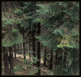 The magical Thuringian Forest