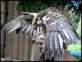 At the falconry