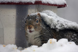 Squirrel during the storma