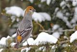 2012 - Janvier, Février, Mars (oiseaux)