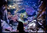 Girl silhouette at aquarium
