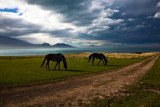 Horses at Kaikoura with approaching storm