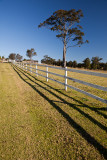 Fence and gum tree