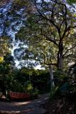 Botanic Gardens, Sydney
