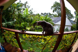 Dougal watching lorikeet on balustrade