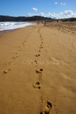 Footprints in the sand at Palm Beach