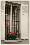 Flowers in Paris window