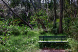 Seat on bushwalk at Narrabeen Lake