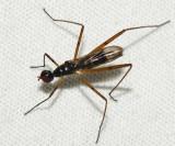 Micropezidae