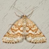 6638 - Powder Moth - Eufidonia notataria