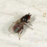 Freeloader Fly