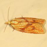 3695 - Sparganothis sulfureana