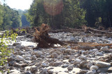 Trees washed up in flood in Rutland, Vt.
