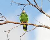 Dominican Birds