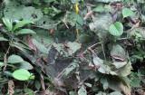 Social Spider web