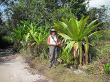 Giant Tank Bromelaid endemic to Kaieteur Falls