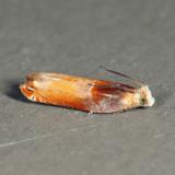 3375 - Ancylis divisana