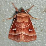9629 - Marsh Fern Moth - Fagitana littera