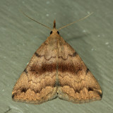 8363 - Dark Phalaenostola - Phalaenostola eumelusalis