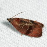 2866 - Evora hemidesma