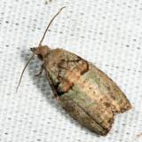 3286 - Epinotia medioviridana