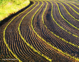 A-maize-ing Lines