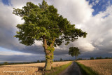 Two Trees Under a Turneresque Stormy Summer Suffolk Sky