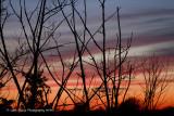 Sundown and Twigs