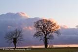 Bare Trees, Big Cloud