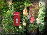 Postbox and Hollyhocks