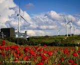 Poppies, Clouds and Windmills