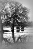 Horses, Trees and Floods