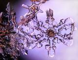 Snowflake Blue.jpg