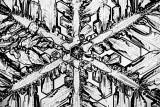 Snowflake00463BW.jpg