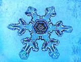 DSC00428Blue Hex.jpg