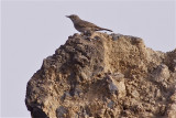IMG_5572sombre rock chat2.jpg